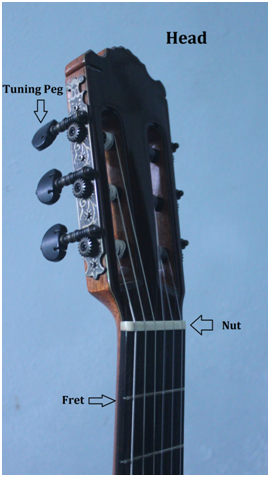 Guitar Head and Neck